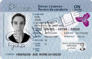 Drivers-Licence-with-19-Age-of-Majority-emphasized[1]